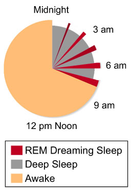 Circadian Rhythm Pie Chart of when you dream