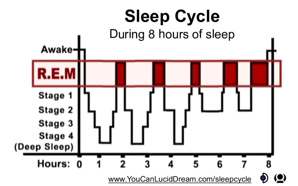 dreams dreaming and phases of sleep The rapid phase of sleep guarantees the instantaneous return of consciousness, capability for orientation with the awakening during or at consequently, dream can have preventive function for example, the nightmares of drops strengthen and is supported the fear of height at the necessary level.