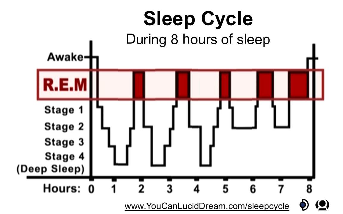 Sleep Cycle with 8 hours of sleep