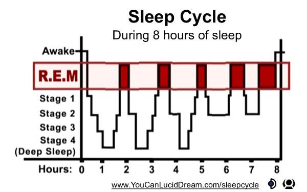 Sleep Cycle during 8 hours of sleep