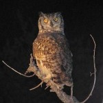 Owl - A nocturnal creature with awareness and vision.